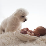 Picture of dog and a baby