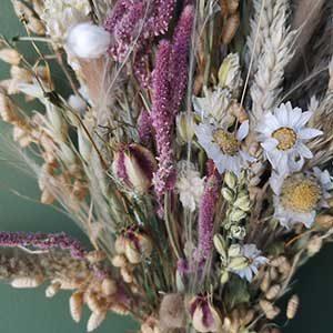 Dried Flower Bouquets Diy Boxes Edinburgh Palette
