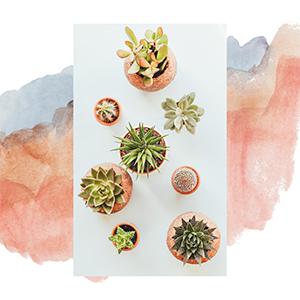 Plants & Nature Pop-Up Exhibition